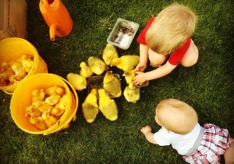 100 дней лета: Пушистые комочки