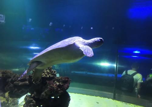 В погоне за летом: киевский океанариум «Морская сказка»