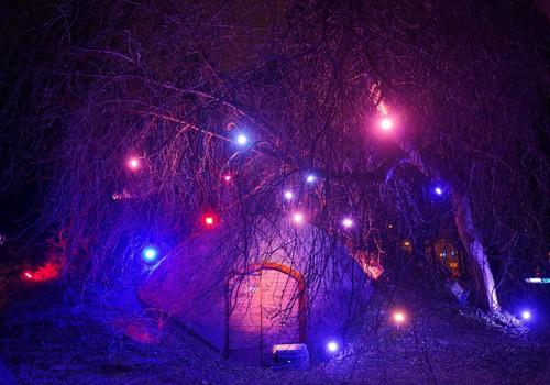 В Ботаническом саду открыта прогулочная тропа «Сад зимнего света»