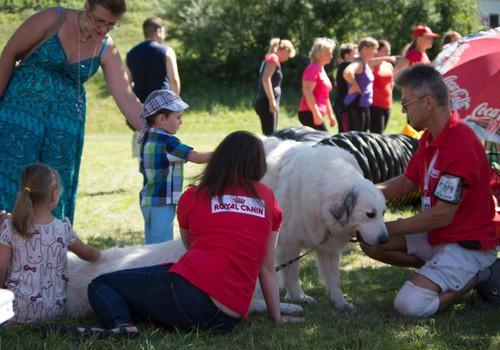 На фестивале Маминого Клуба будет особенная выставка собак и информация о канистерапии
