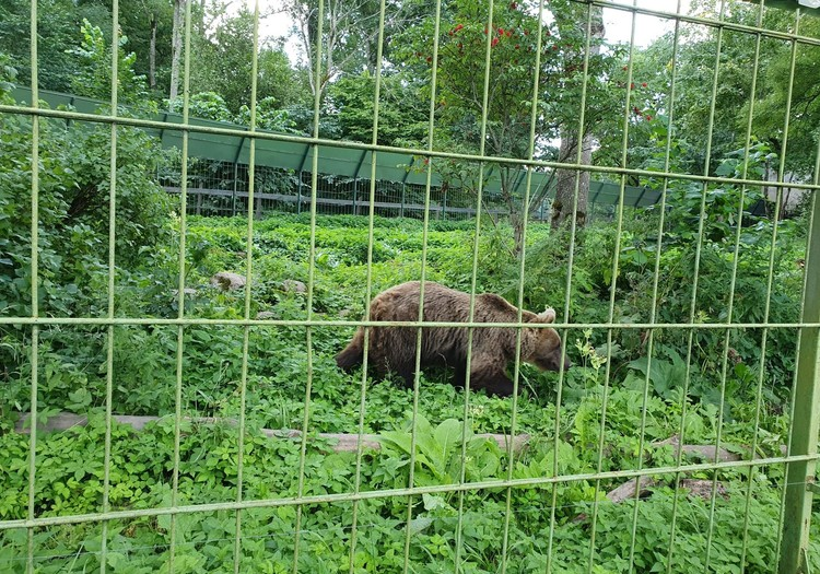 Лесной зоопарк Элиствере под Тарту