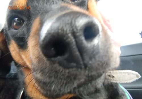 Началась регистрация домашних животных
