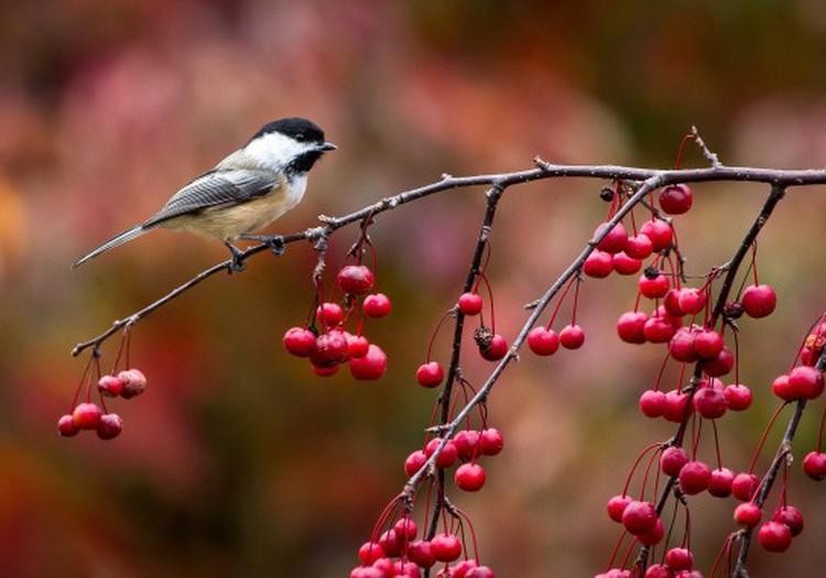 Почему птицы осенью улетают?