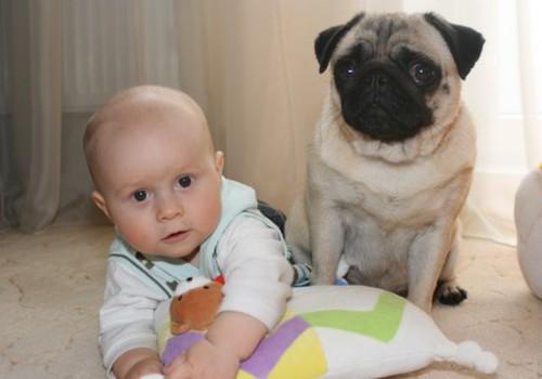 Чему учат ребёнка домашние животные