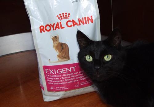 Наш вердикт тестирования корма  Royal Canin