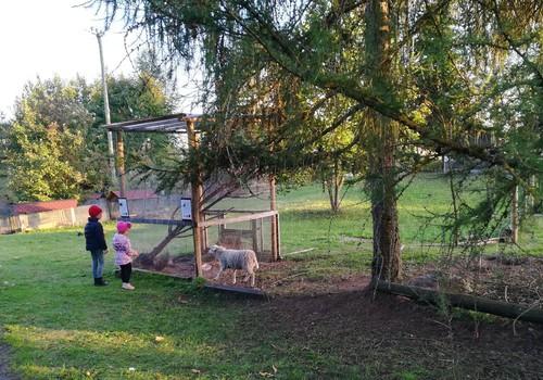 Мини-зоо в Икшкиле