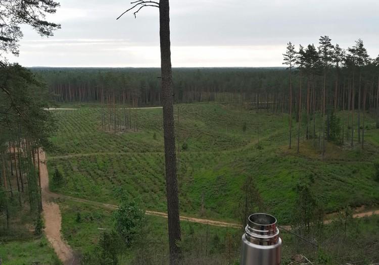 Летний гид: отправляемся в лес!