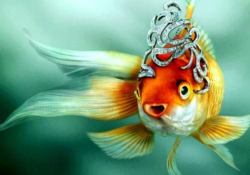 Волшебная рыбка на память...
