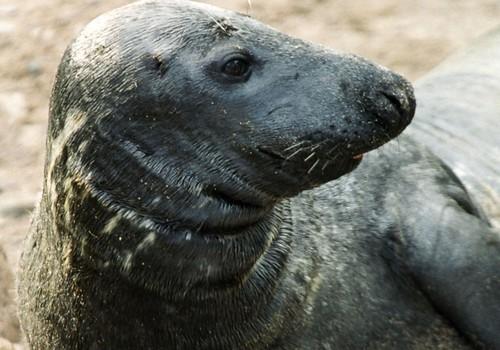 А вы знаете, что посмотреть на кормление зверей в Зоопарке можно будет лишь до конца августа? Смотрите расписание и ловите последние деньки!