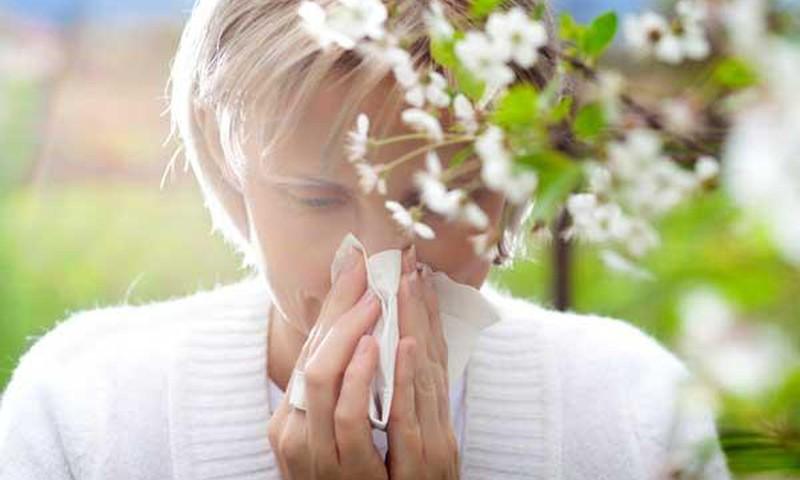 БЛОГ ЛЕНЫ: Аллергия на пыльцу и как с ней справляться