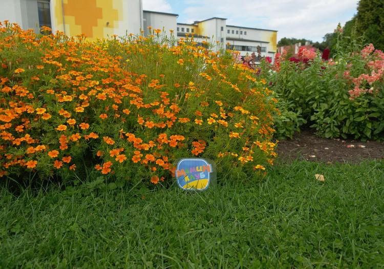 ОТКРЫТИЕ ЛЕТА: Ботанический сад Юрмалы – место где растут латвийские арбузы!
