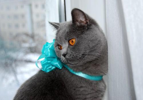 Кошки – счастливые существа. Их вообще ничто не волнует!