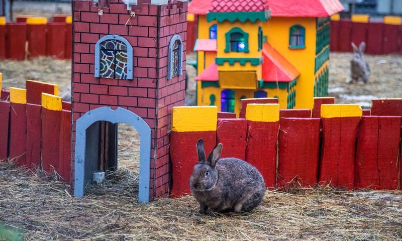 Куда сходить с детьми: на Эспланаде - королевство кроликов и домашние овечки!
