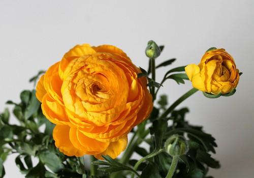 """Постельное бельё """"Солнечные цветы"""" стоимостью 195 EUR и первые подгузники Huggies Elite Soft получает..."""