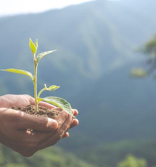 5 привычек на пользу окружающей среде и нашему кошельку