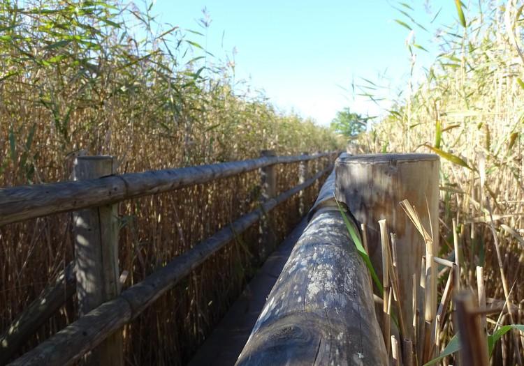 Тростниковая тропа Каниера - для любителей красоты природы