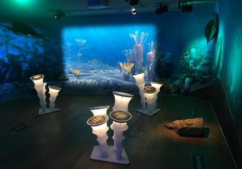 Познавательная выставка «Тайны морских глубин» открыта для посетителей
