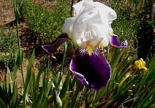 Мои любимые цветы - те, что растут на грядке!