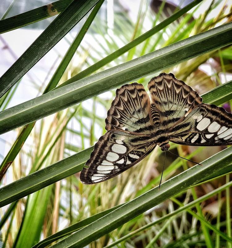 Летний гид 2020: Дом тропических бабочек в Сигулде