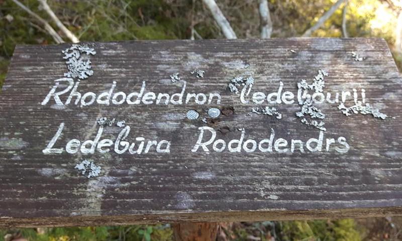 Дендрарий Лачупите – лесная прогулка и пляж
