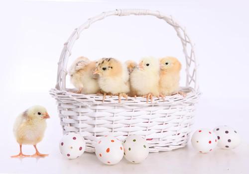 Клуб активных и креативных поздравляет всех с праздником светлой Пасхи!