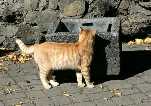 Апинис: Бродячих котов и собак надо уничтожить