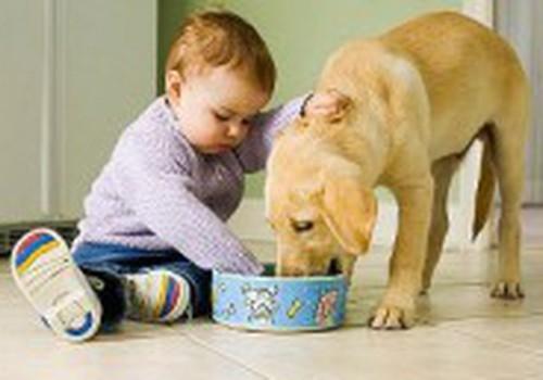 Объясняем, почему собака лучший друг человека