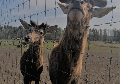 Летний гид: куда отправиться в Елгаве? Новая детская площадка и контактный мини-зоо!