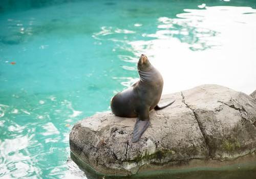 Идеи для выходных с семьёй: Рижский зоопарк