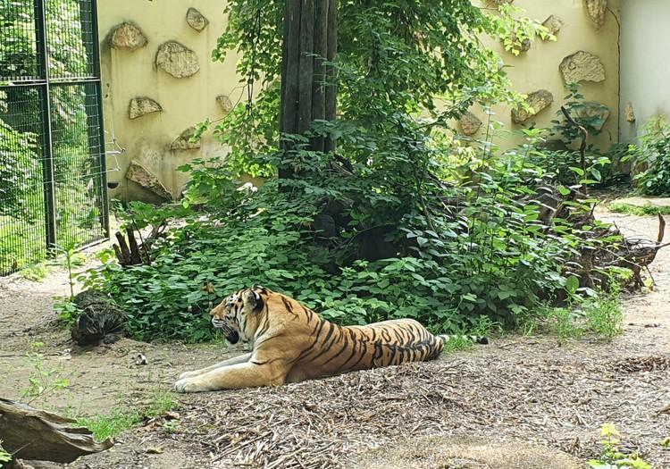 В Каунас. День 2: зоопарк и променад