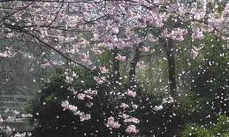 Весна Снежной королевы