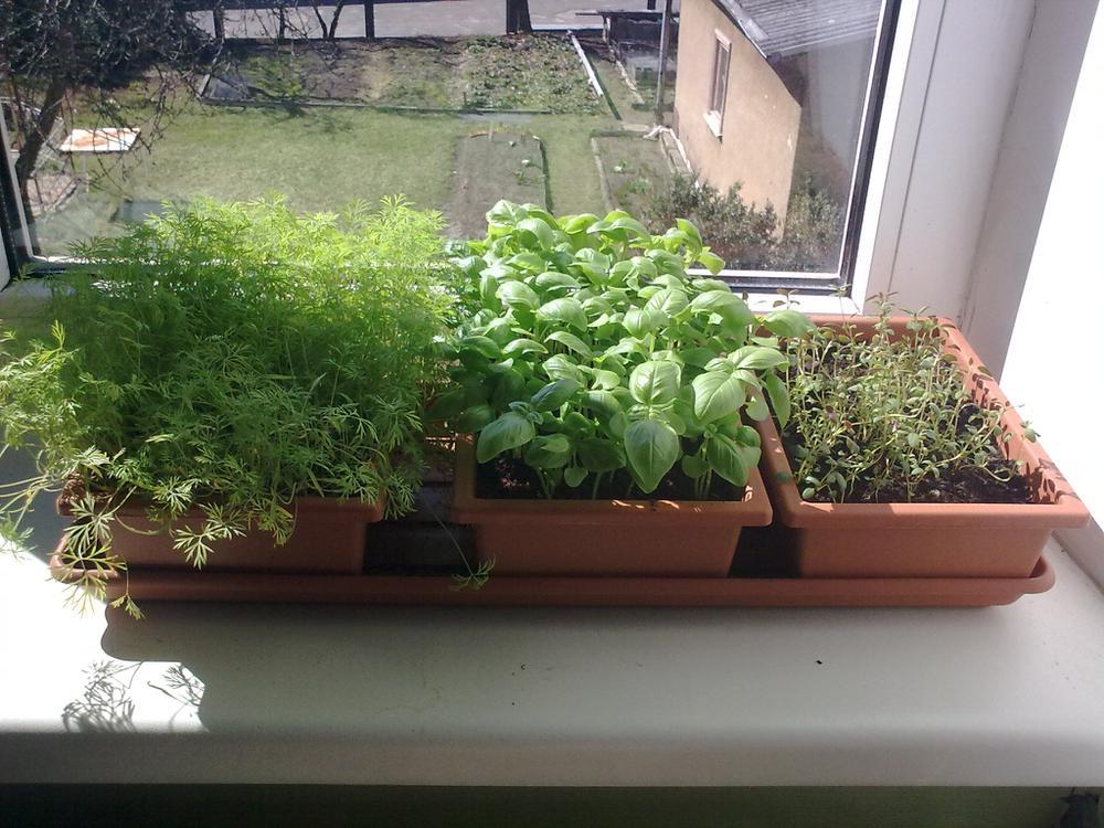 Выращивание зелени: секреты для начинающих. все, что вы хоте.