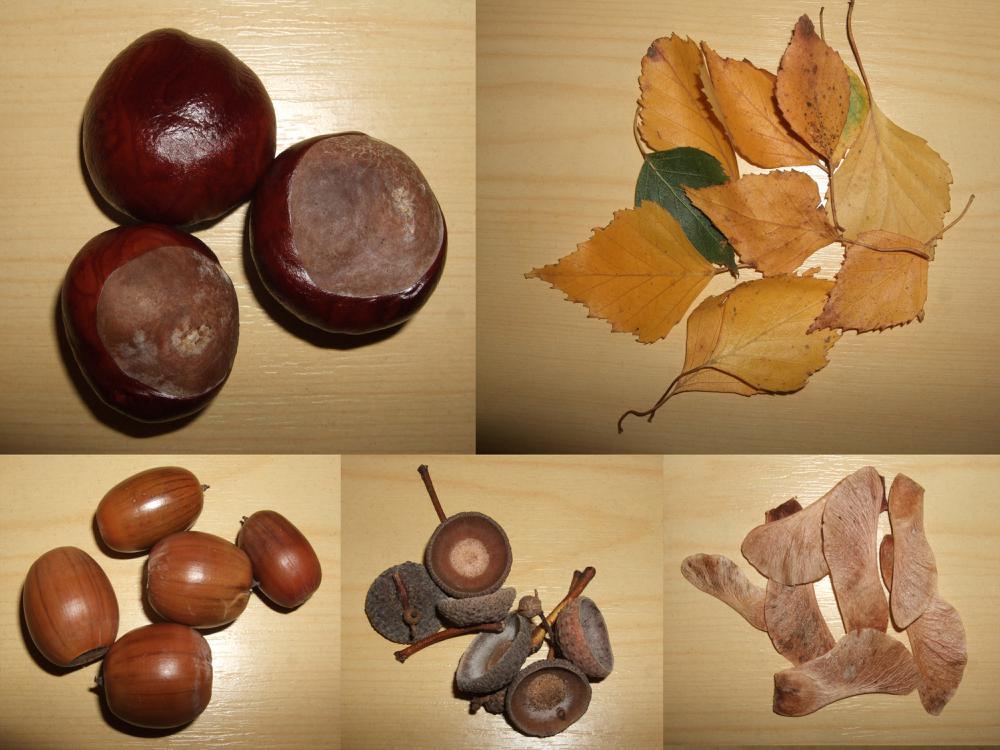Поделки из желудей из листьев 79